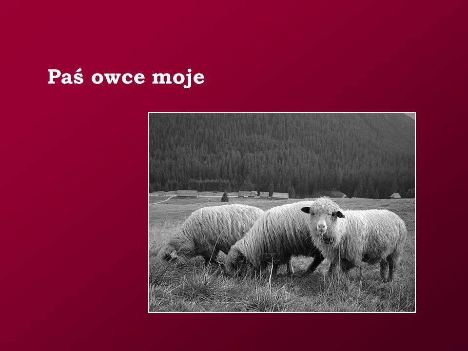 Paś owce moje