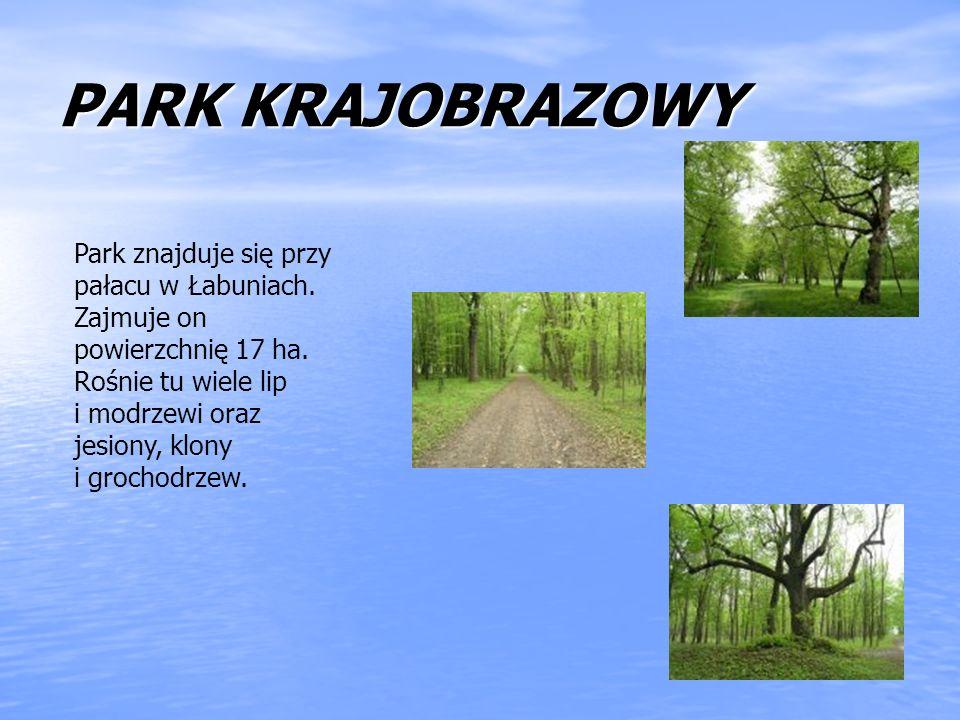 PARK KRAJOBRAZOWY Park znajduje się przy pałacu w Łabuniach. Zajmuje on powierzchnię 17 ha. Rośnie tu wiele lip i modrzewi oraz jesiony, klony i groch