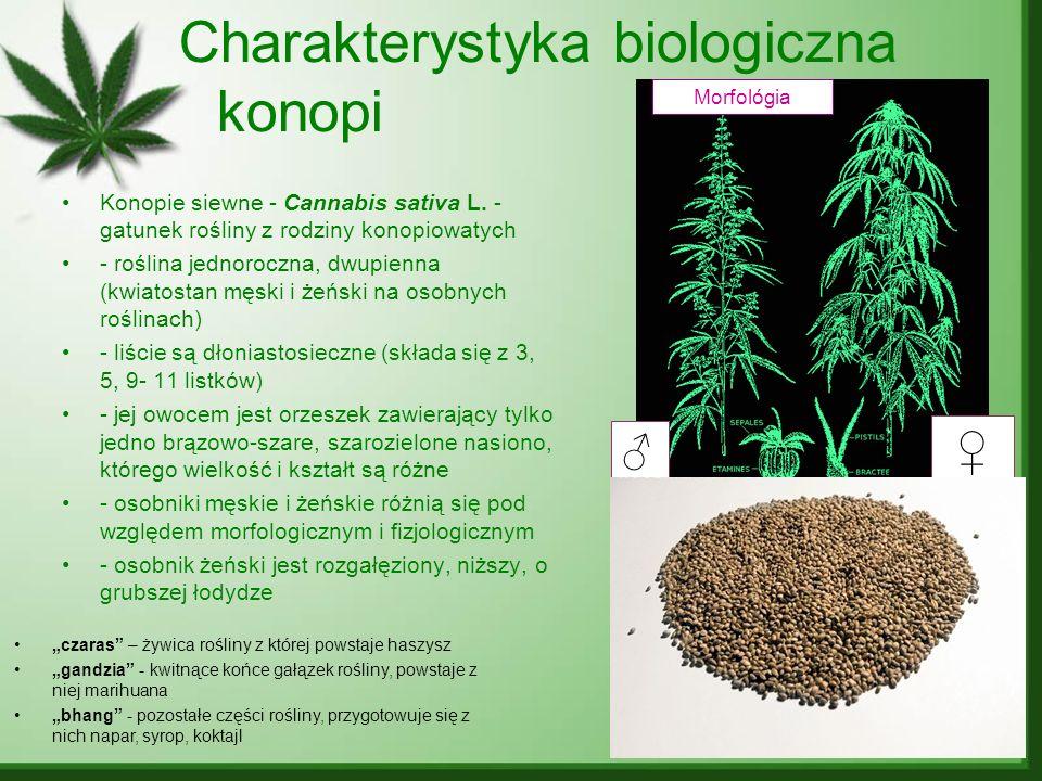 Morfológia czaras – żywica rośliny z której powstaje haszysz gandzia - kwitnące końce gałązek rośliny, powstaje z niej marihuana bhang - pozostałe czę