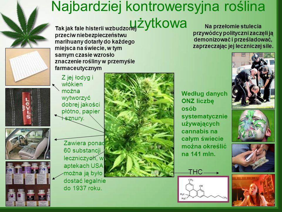 Najbardziej kontrowersyjna roślina użytkowa THC Według danych ONZ liczbę osób systematycznie używających cannabis na całym świecie można określić na 1