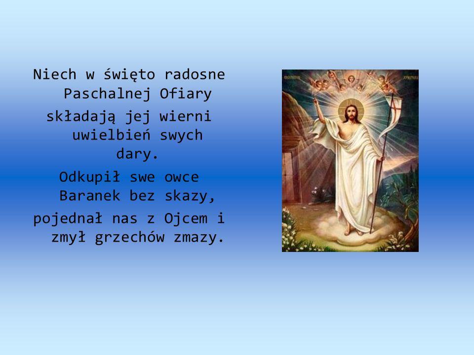 Niech w święto radosne Paschalnej Ofiary składają jej wierni uwielbień swych dary. Odkupił swe owce Baranek bez skazy, pojednał nas z Ojcem i zmył grz
