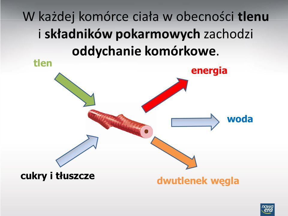 W każdej komórce ciała w obecności tlenu i składników pokarmowych zachodzi oddychanie komórkowe. tlen cukry i tłuszcze energia woda dwutlenek węgla