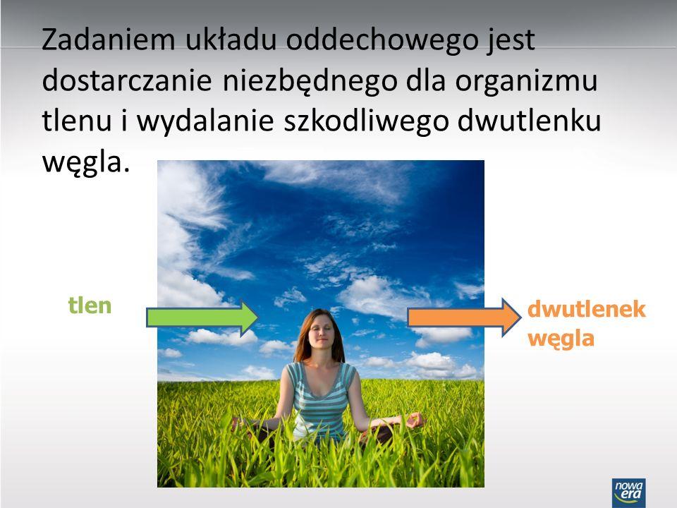 Zadaniem układu oddechowego jest dostarczanie niezbędnego dla organizmu tlenu i wydalanie szkodliwego dwutlenku węgla. tlen dwutlenek węgla