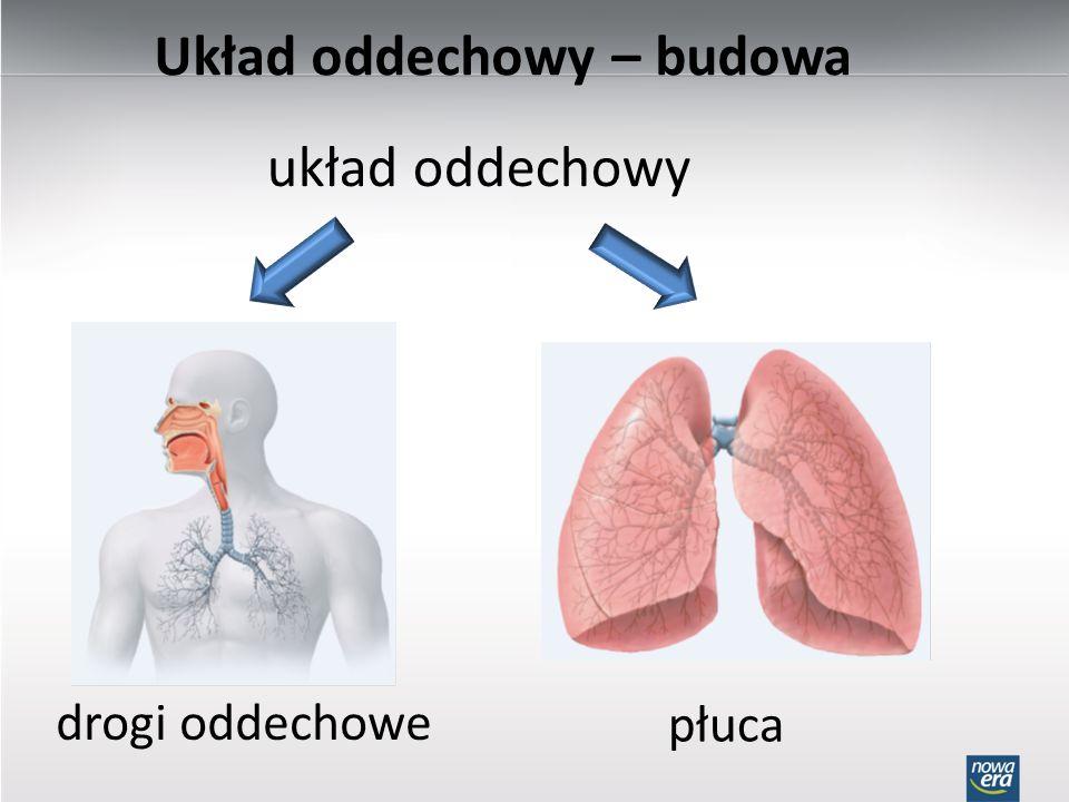 Układ oddechowy – budowa układ oddechowy drogi oddechowe płuca