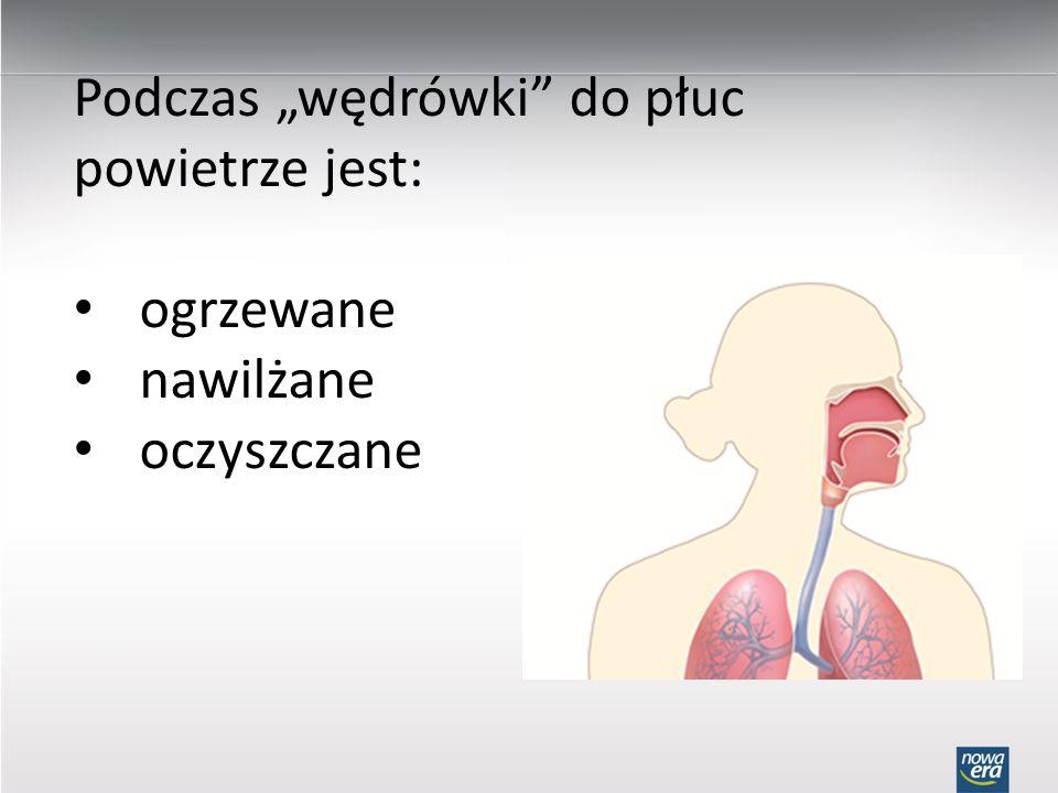 Podczas wędrówki do płuc powietrze jest: ogrzewane nawilżane oczyszczane