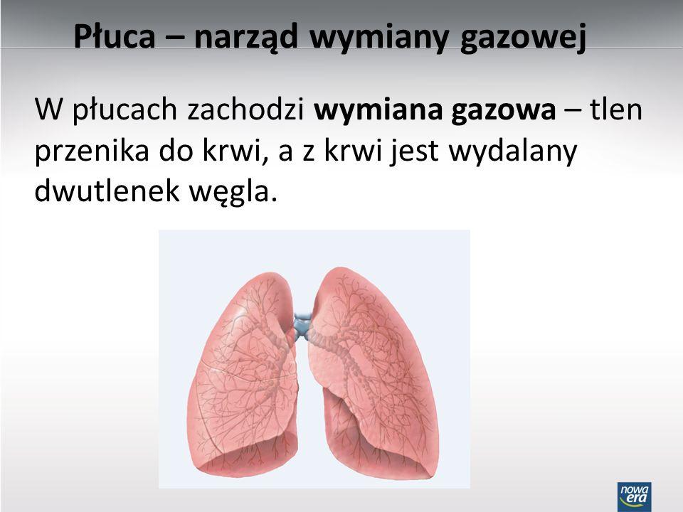 W płucach zachodzi wymiana gazowa – tlen przenika do krwi, a z krwi jest wydalany dwutlenek węgla. Płuca – narząd wymiany gazowej
