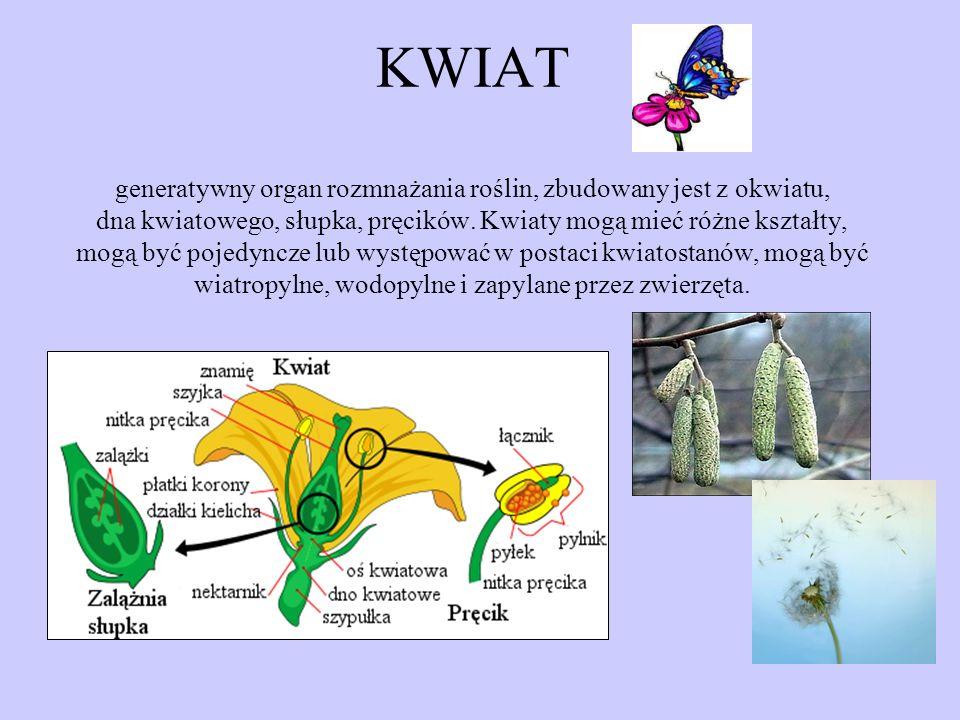 KWIAT generatywny organ rozmnażania roślin, zbudowany jest z okwiatu, dna kwiatowego, słupka, pręcików. Kwiaty mogą mieć różne kształty, mogą być poje