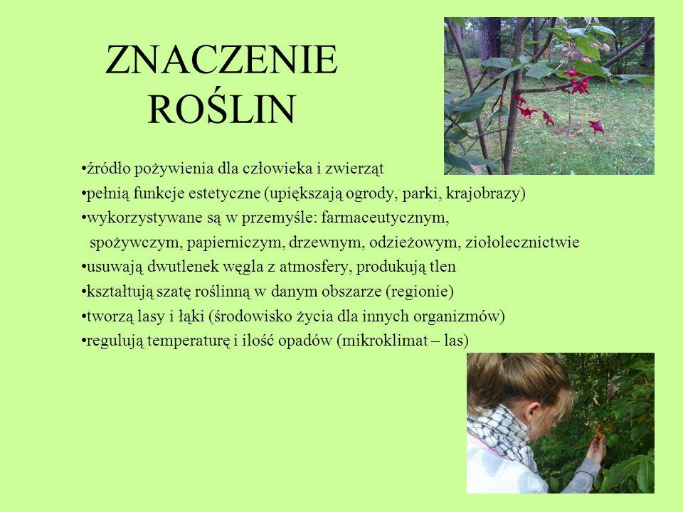 ZNACZENIE ROŚLIN źródło pożywienia dla człowieka i zwierząt pełnią funkcje estetyczne (upiększają ogrody, parki, krajobrazy) wykorzystywane są w przem