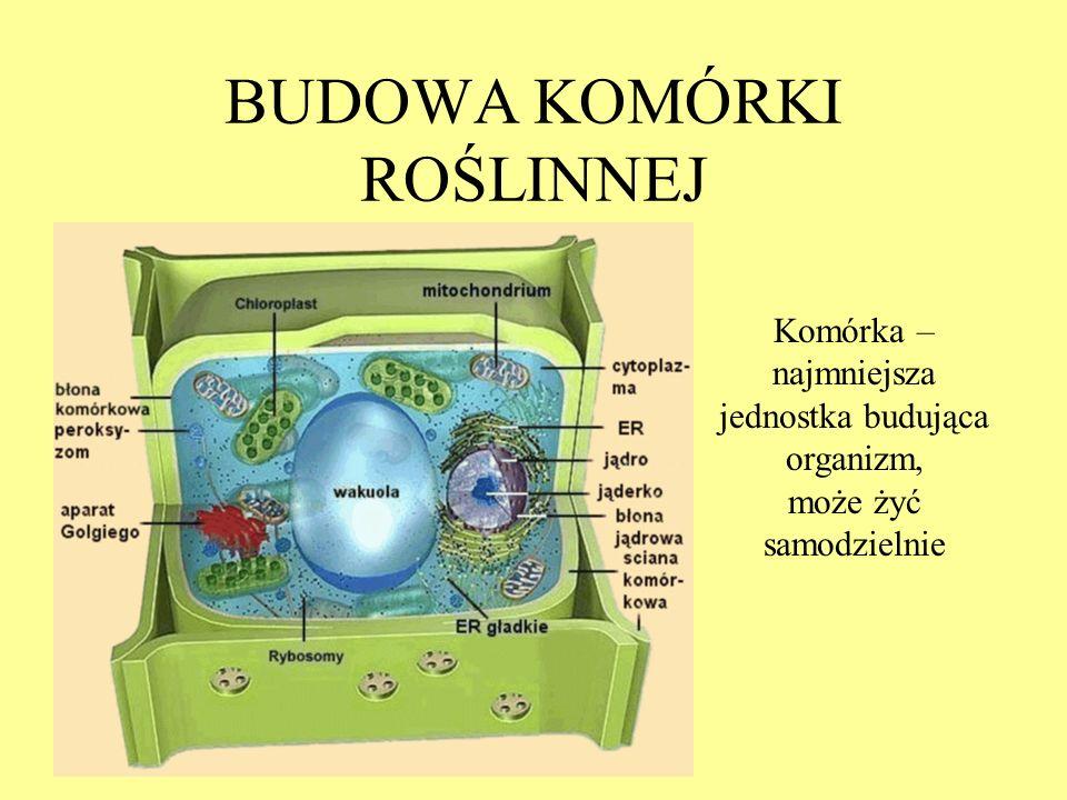 ORGANELLA KOMÓRKOWE Chloroplasty – uczestniczą w procesie fotosyntezy