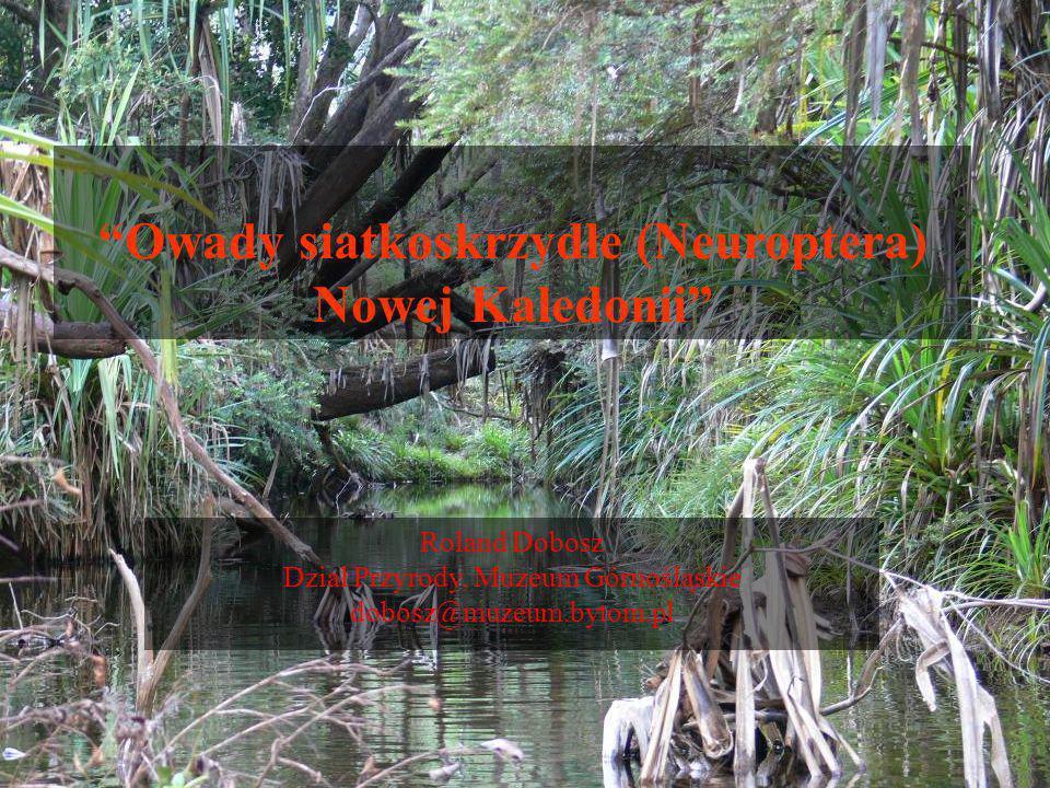 Endemizm Nowej Kaledonii Kagu (Rhynochetos jubatus) Powierzchnia kraju 19 103 km 2 Liczba gat.