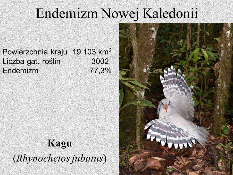 Endemizm Nowej Kaledonii Kagu (Rhynochetos jubatus) Powierzchnia kraju 19 103 km 2 Liczba gat. roślin 3002 Endemizm 77,3%