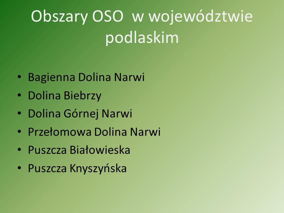 Obszary Natura 2000 dzielimy na: Specjalne Obszary Ochrony Siedlisk (SOO) Obszary Specjalne Ochrony Ptaków (OSO)