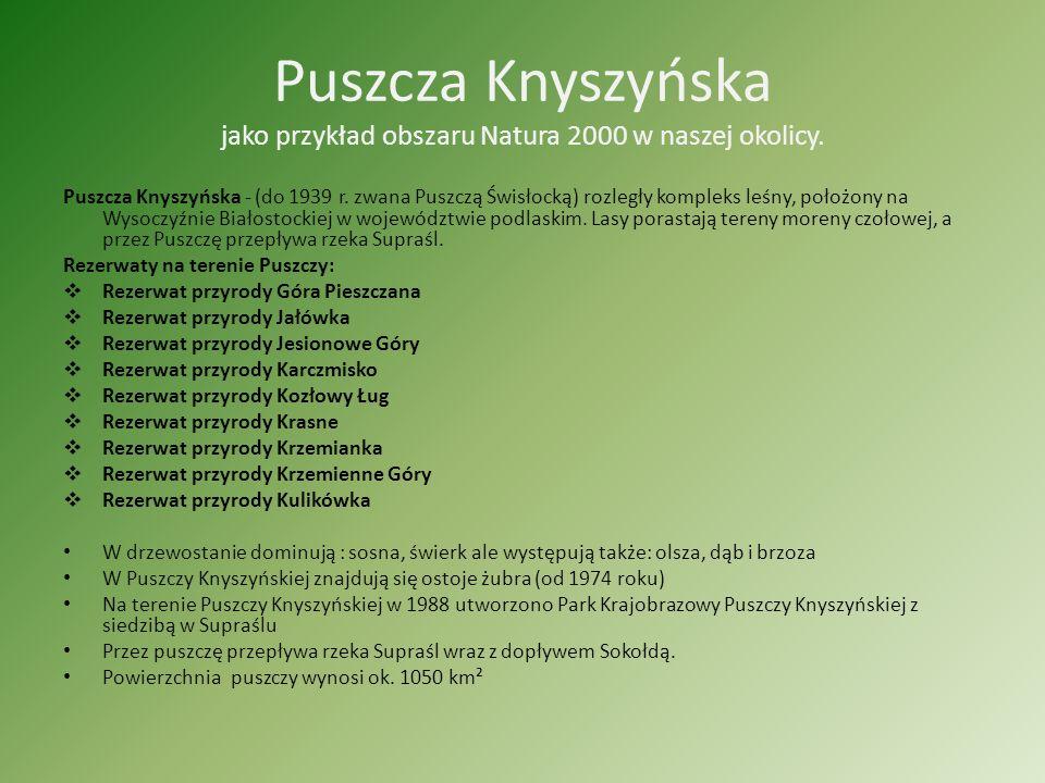 Puszcza Knyszyńska jako przykład obszaru Natura 2000 w naszej okolicy.