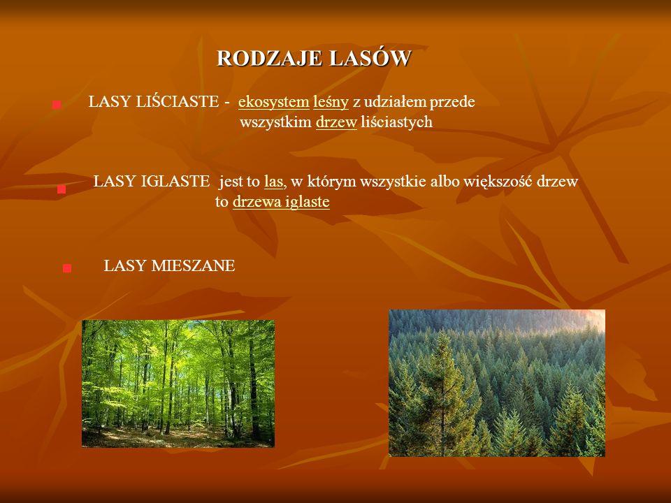 RODZAJE LASÓW LASY LIŚCIASTE - ekosystem leśny z udziałem przede wszystkim drzew liściastychekosystemleśnydrzew LASY IGLASTE jest to las, w którym wszystkie albo większość drzew to drzewa iglastelasdrzewa iglaste LASY MIESZANE
