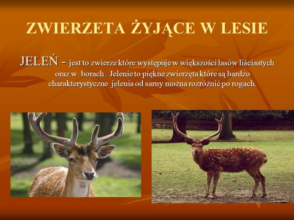 ZWIERZETA ŻYJĄCE W LESIE JELEŃ - jest to zwierze które występuje w większości lasów liściastych oraz w borach.