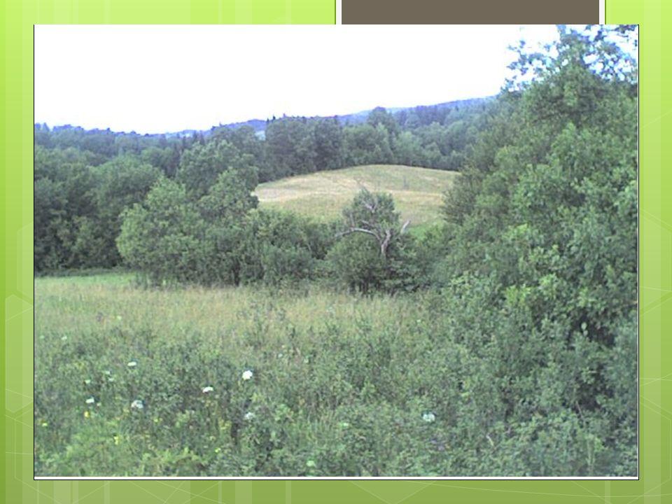 Park Krajobrazowy Dolina S ł upi Park Krajobrazowy Dolina Słupi (kaszb Park Krajobrazy Dolëzna Słëpi) – park krajobrazowy położony w okolicach miasta Słupska, obejmujący dolinę rzeki Słupi.