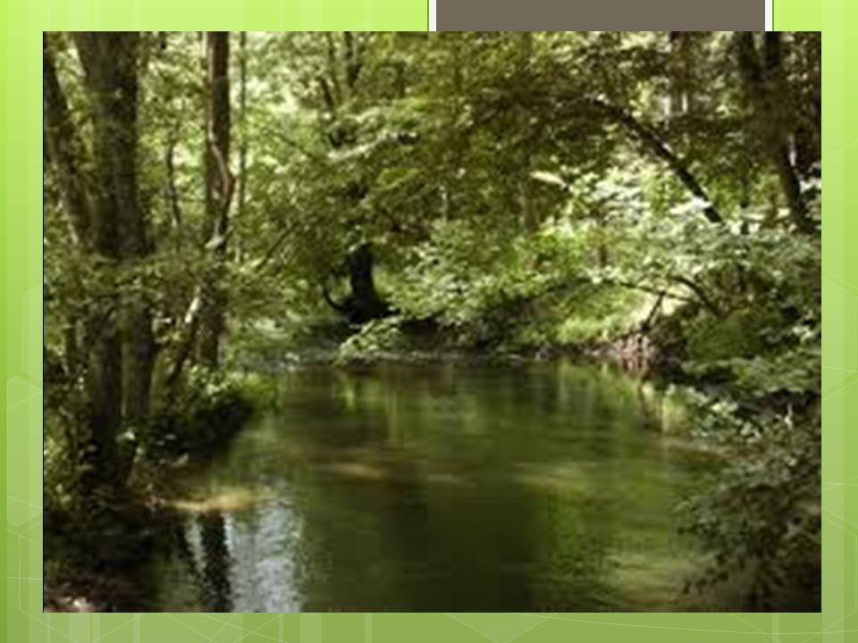 Park Krajobrazowy Dolina BarYczy Park Krajobrazowy Dolina Baryczy – park krajobrazowy w województwie dolnośląskim i wielkopolskim, położony między Żmigrodem i Przygodzicami.