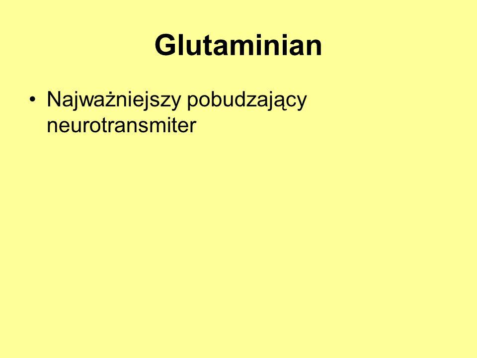 Glutaminian Najważniejszy pobudzający neurotransmiter