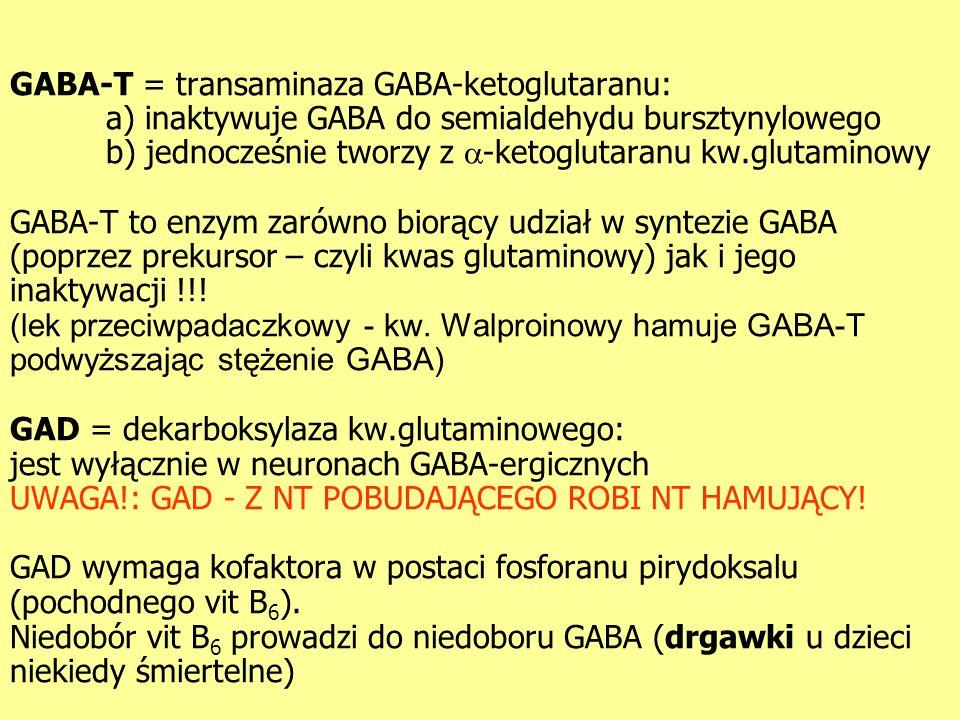 GABA-T = transaminaza GABA-ketoglutaranu: a) inaktywuje GABA do semialdehydu bursztynylowego b) jednocześnie tworzy z -ketoglutaranu kw.glutaminowy GABA-T to enzym zarówno biorący udział w syntezie GABA (poprzez prekursor – czyli kwas glutaminowy) jak i jego inaktywacji !!.