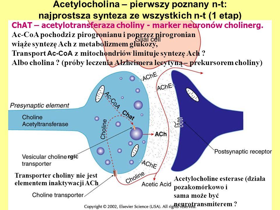 Acetylocholina – pierwszy poznany n-t: najprostsza synteza ze wszystkich n-t (1 etap) ChAT – acetylotransferaza choliny - marker neuronów cholinerg. A