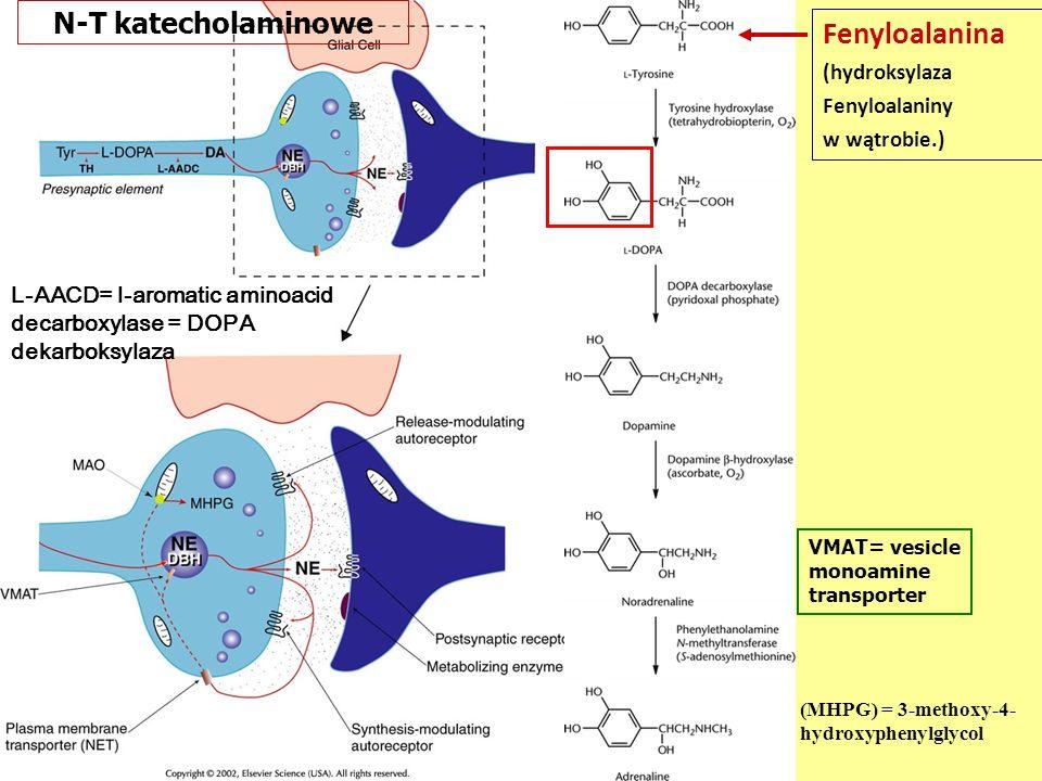 L-AACD= l-aromatic aminoacid decarboxylase = DOPA dekarboksylaza Fenyloalanina (hydroksylaza Fenyloalaniny w wątrobie.) N-T katecholaminowe VMAT= vesicle monoamine transporter (MHPG) = 3-methoxy-4- hydroxyphenylglycol