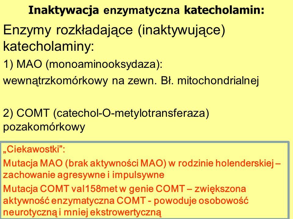 Inaktywacja enzymatyczna katecholamin: Enzymy rozkładające (inaktywujące) katecholaminy: 1) MAO (monoaminooksydaza): wewnątrzkomórkowy na zewn.
