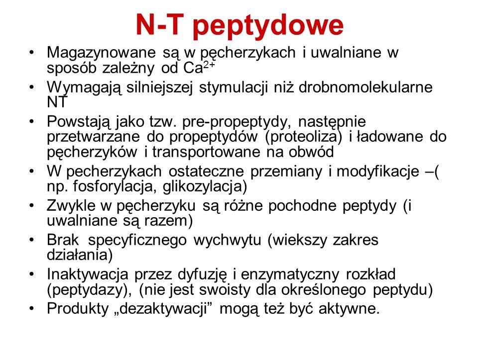 N-T peptydowe Magazynowane są w pęcherzykach i uwalniane w sposób zależny od Ca 2+ Wymagają silniejszej stymulacji niż drobnomolekularne NT Powstają j