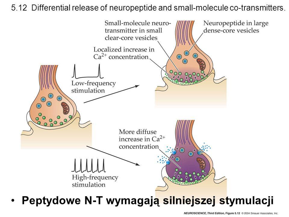 5.12 Differential release of neuropeptide and small-molecule co-transmitters. Peptydowe N-T wymagają silniejszej stymulacji