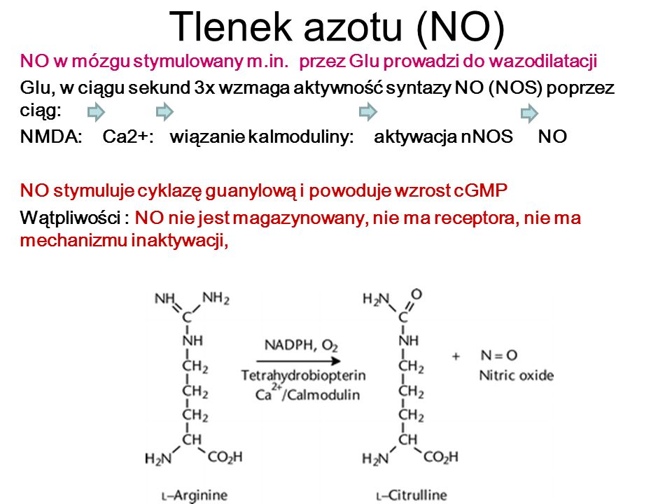Tlenek azotu (NO) NO w mózgu stymulowany m.in. przez Glu prowadzi do wazodilatacji Glu, w ciągu sekund 3x wzmaga aktywność syntazy NO (NOS) poprzez ci