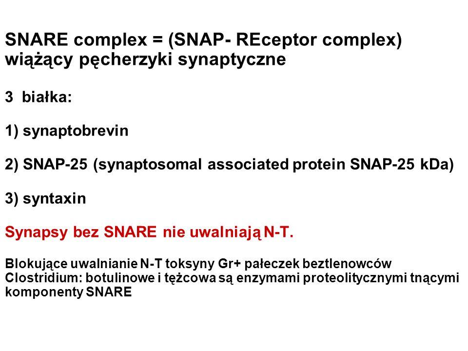 SNARE complex = (SNAP- REceptor complex) wiążący pęcherzyki synaptyczne 3 białka: 1) synaptobrevin 2) SNAP-25 (synaptosomal associated protein SNAP-25