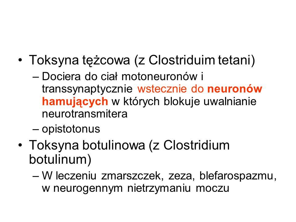 Toksyna tężcowa (z Clostriduim tetani) –Dociera do ciał motoneuronów i transsynaptycznie wstecznie do neuronów hamujących w których blokuje uwalnianie neurotransmitera –opistotonus Toksyna botulinowa (z Clostridium botulinum) –W leczeniu zmarszczek, zeza, blefarospazmu, w neurogennym nietrzymaniu moczu