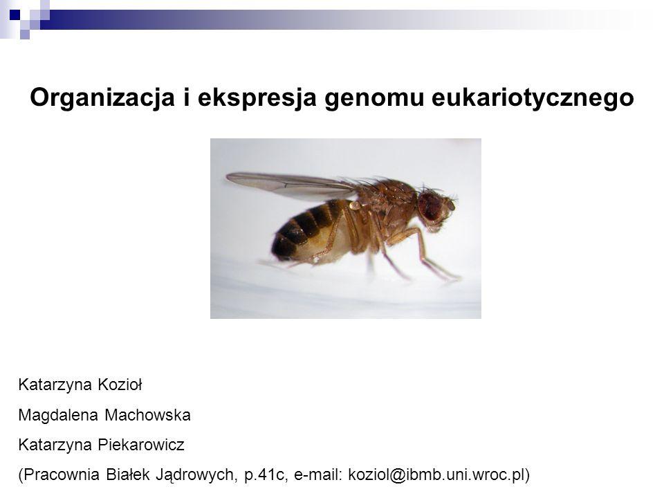 Organizacja i ekspresja genomu eukariotycznego Katarzyna Kozioł Magdalena Machowska Katarzyna Piekarowicz (Pracownia Białek Jądrowych, p.41c, e-mail: