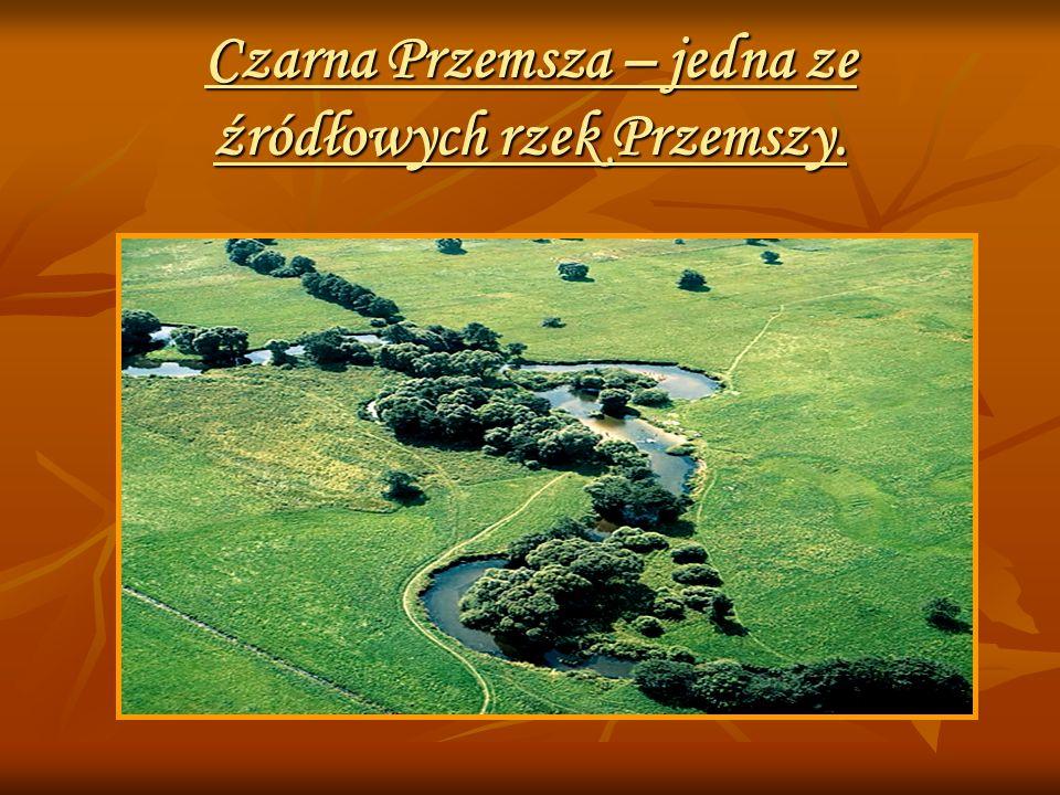 Czarna Przemsza – jedna ze źródłowych rzek Przemszy.