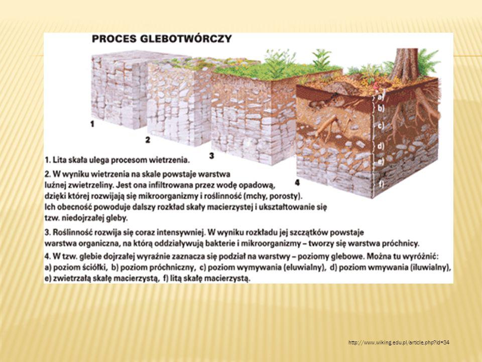 http://www.wiking.edu.pl/article.php?id=34