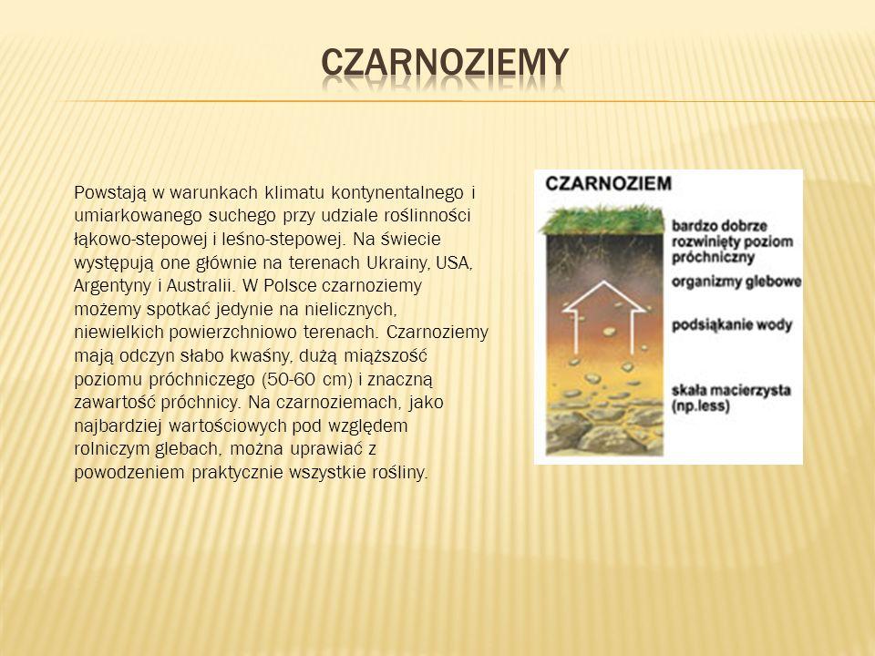 Powstają w warunkach klimatu kontynentalnego i umiarkowanego suchego przy udziale roślinności łąkowo-stepowej i leśno-stepowej.