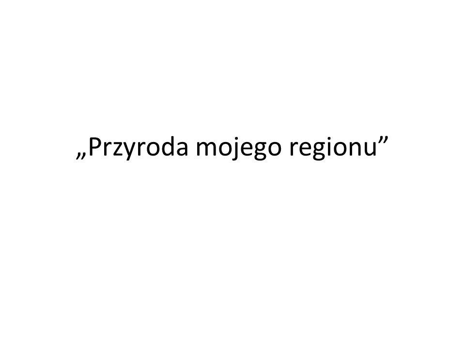 Przyroda mojego regionu