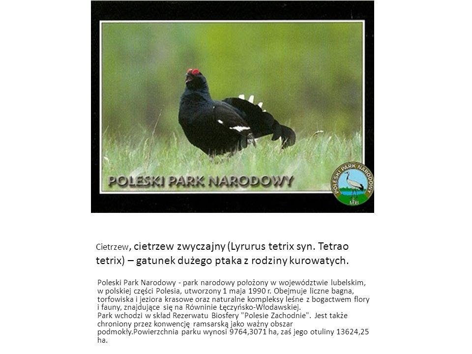 Cietrzew, cietrzew zwyczajny (Lyrurus tetrix syn. Tetrao tetrix) – gatunek dużego ptaka z rodziny kurowatych. Poleski Park Narodowy - park narodowy po