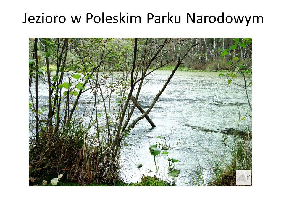 Jezioro w Poleskim Parku Narodowym