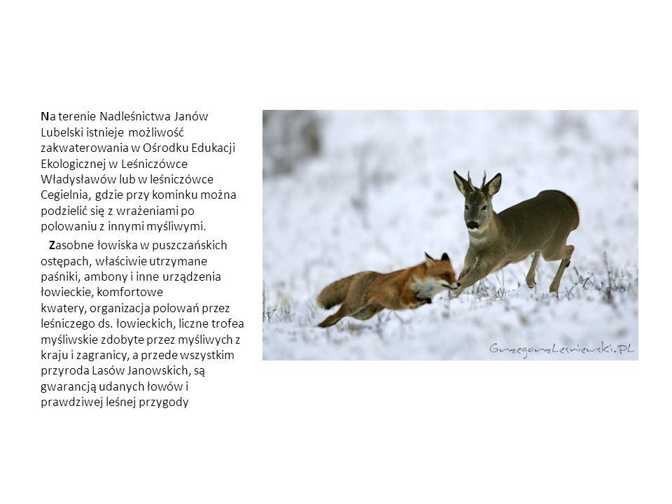 Na terenie Nadleśnictwa Janów Lubelski istnieje możliwość zakwaterowania w Ośrodku Edukacji Ekologicznej w Leśniczówce Władysławów lub w leśniczówce C