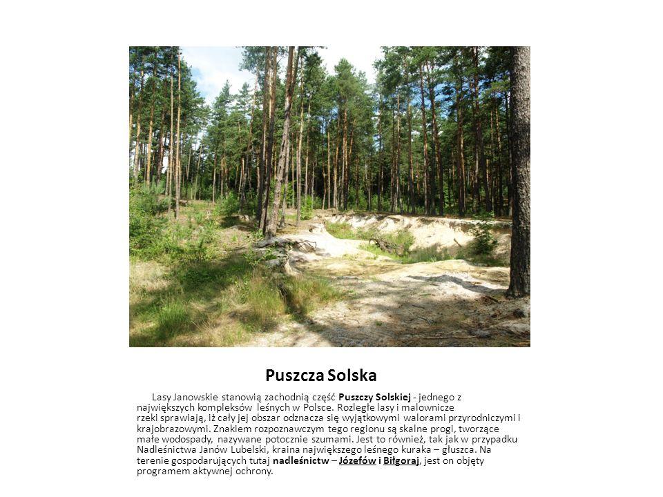 Puszcza Solska Lasy Janowskie stanowią zachodnią część Puszczy Solskiej - jednego z największych kompleksów leśnych w Polsce. Rozległe lasy i malownic