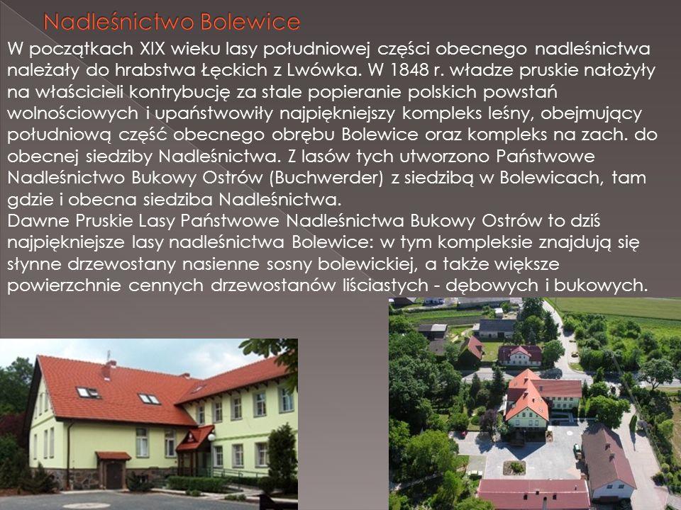 W początkach XIX wieku lasy południowej części obecnego nadleśnictwa należały do hrabstwa Łęckich z Lwówka. W 1848 r. władze pruskie nałożyły na właśc