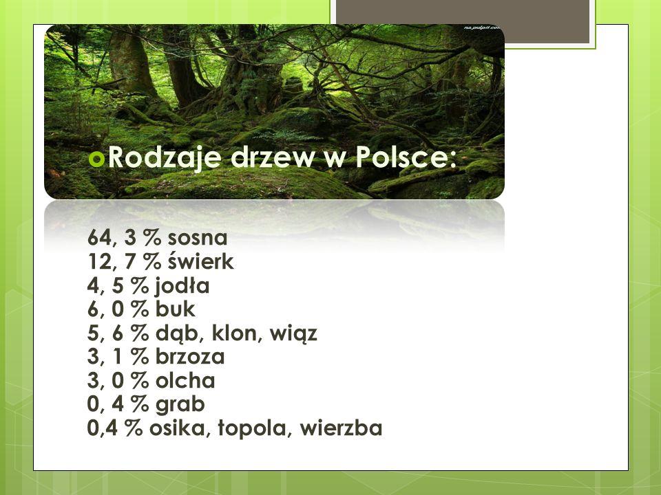 Bory sosnowe Bory sosnowe zajmują największa powierzchnię Polski.
