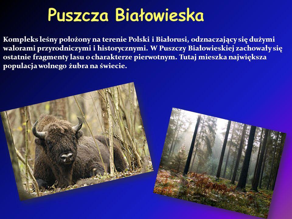 Kompleks leśny położony na terenie Polski i Białorusi, odznaczający się dużymi walorami przyrodniczymi i historycznymi.