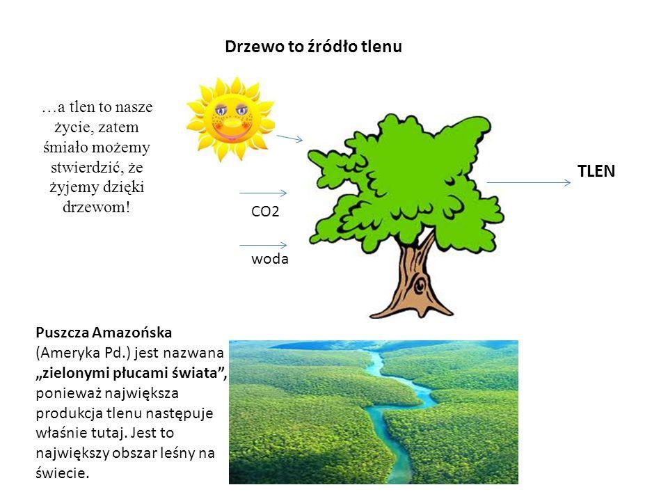 Drzewo to źródło tlenu woda TLEN CO2 …a tlen to nasze życie, zatem śmiało możemy stwierdzić, że żyjemy dzięki drzewom! Puszcza Amazońska (Ameryka Pd.)