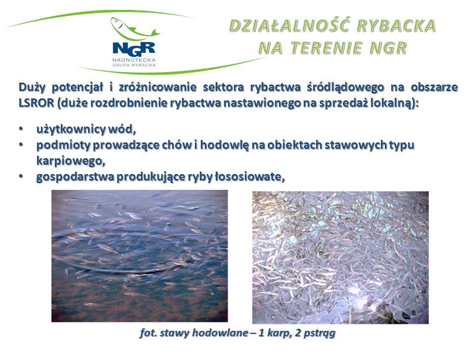 Duży potencjał i zróżnicowanie sektora rybactwa śródlądowego na obszarze LSROR (duże rozdrobnienie rybactwa nastawionego na sprzedaż lokalną): użytkow