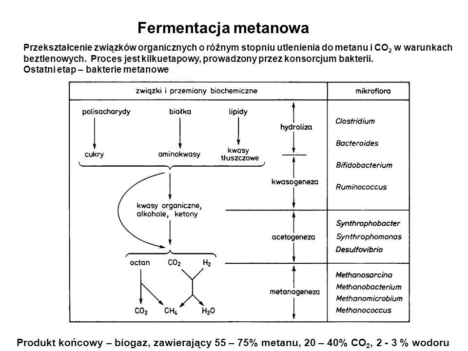 Fermentacja metanowa CO 2 + H 2 CH 4 + 2H 2 O 4HCOOH CH 4 + 3CO 2 + 2H 2 O 4CH 3 OH 3CH 4 + CO 2 + 2H 2 O CH 3 COOH CH 4 + CO 2 Reakcje metanogenezy z różnych substratów Reakcje te prowadzone są przez drobnoustroje należące do Archebacteria, Będące ścisłymi beztlenowcami; większość z nich jest organizmami termofilnymi.