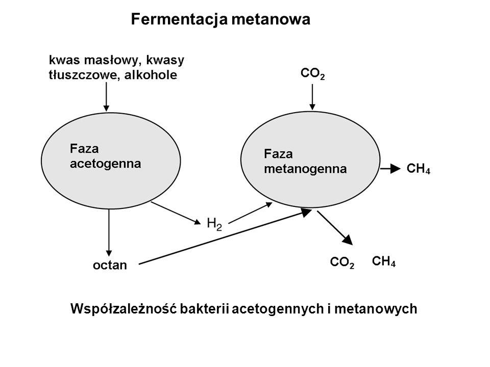 Specyficzne formy wzrostu drobnoustrojów Kultury mieszane Konsorcja Biofilm Eutrofizacja Sporulacja OddziaływanieEfekt Komensalizm Kometabolizm Syntrofizm Rizosfera Mutualizm Pasożytnictwo Jedna populacja korzysta, a inne są w sytuacji obojętnej Produkt metabolizmu jednej populacji jest substratem dla metabolizmu innej populacji Dwie populacje dostarczają sobie nawzajem substancji pokarmowych Zależność wzrostu drobnoustrojów glebowych żyjących w pobliżu korzeni roślin od sygnałów metabolicznych wydzielanych przez korzenie Obie populacje korzystają z współobecności Jedna populacja żyje kosztem innej