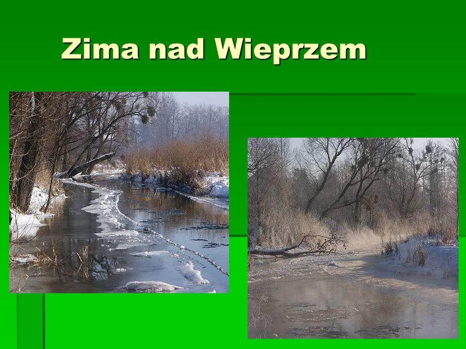 Zima nad Wieprzem Zima nad Wieprzem