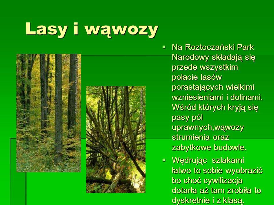 Lasy i wąwozy Lasy i wąwozy Na Roztoczański Park Narodowy składają się przede wszystkim połacie lasów porastających wielkimi wzniesieniami i dolinami.