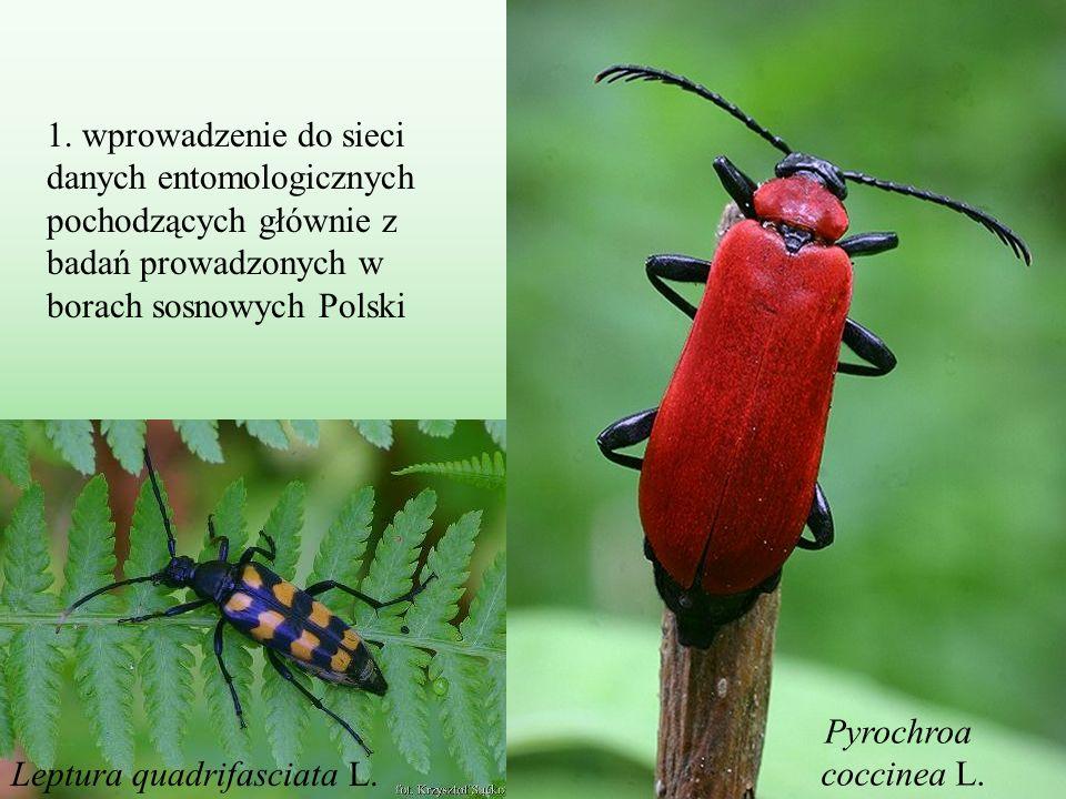 1. wprowadzenie do sieci danych entomologicznych pochodzących głównie z badań prowadzonych w borach sosnowych Polski Pyrochroa coccinea L. Leptura qua